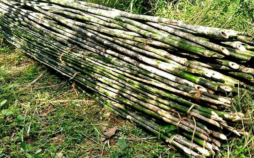 Bamboo Facts from Bamboo Central.org: